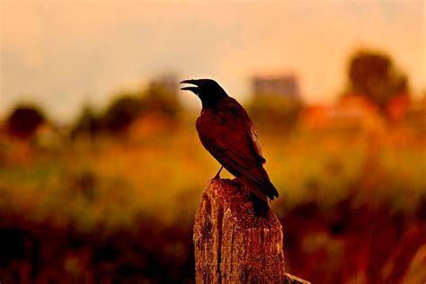 Cuervos o palomas: Elías es alimentado por cuervos ...