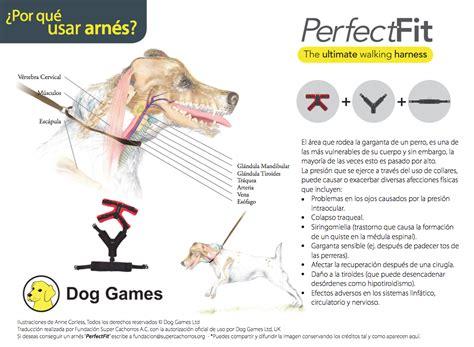 Cuidado con el cuello de tu perro – Super Cachorros