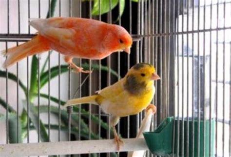 Cuidados para las aves domésticas