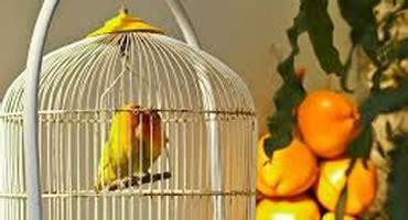 Cuidados para tener pájaros en casa y tenerlos adecuadamente