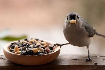 Cultivar Alimento para Aves   La Huerta de Ivan