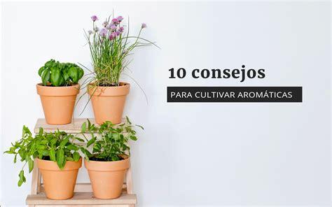 Cultivar té en casa   Aprenda sobre el cuidado de las ...