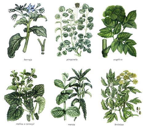 Cultivo de plantas aromáticas: Febrero y Marzo | Aprende ...