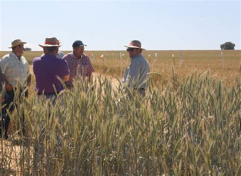 Cultivos de secano prueban con la agricultura ecológica ...