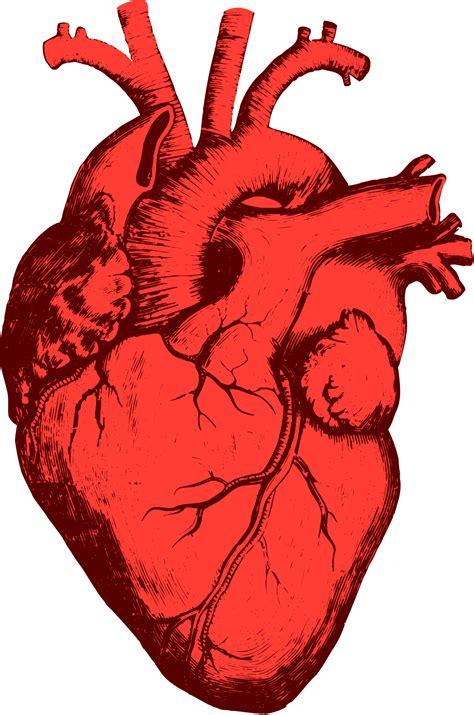 cuore   Wikizionario