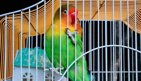 Curar una herida a un pájaro