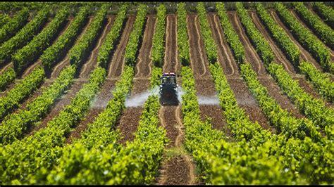 Curiosidades de la Agricultura en Colombia  TvAgro por ...