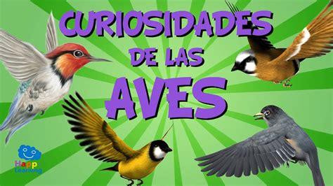 Curiosidades de las aves | Videos Educativos para Niños ...