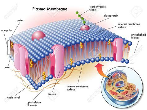 Curso de posgrado sobre microorganismos promotores del ...