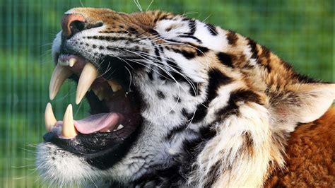 Cute, Download Animal Photos, Best Friend, Wildlife, Hairy ...