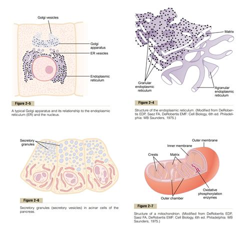 Cytoplasm and Its Organelles   Physical Structure of the Cell