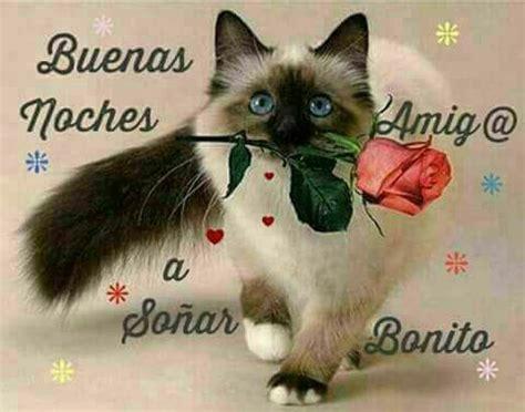 D11122016 Lindo gatito buenas noches | Fotos buenas noches ...