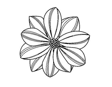 Daisy flower coloring page   Coloringcrew.com