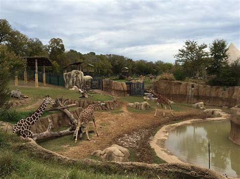 Dallas Zoo is Largest Zoo in Texas | Animals, Zoos and The zoo