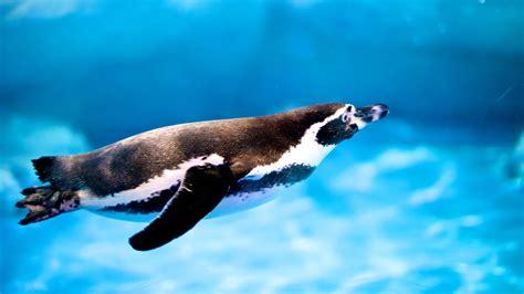 Damos comida a los pingüinos | Zoo Barcelona