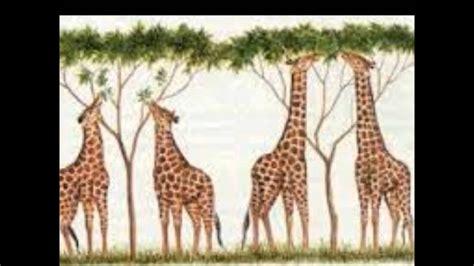Darwin y la teoría de la evolución por seleccion natural ...