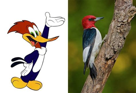Datos Sorprendentes Del Pájaro Carpintero   Info   Taringa!
