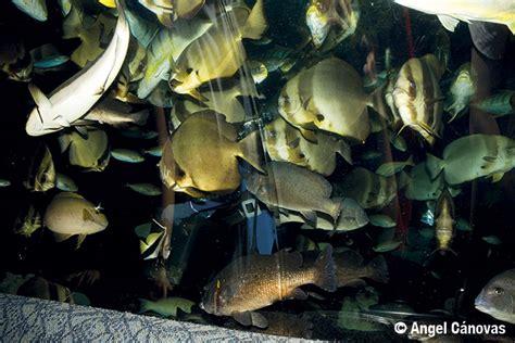 De peces y de cifras  I : ¿Cuántas especies de peces hay ...