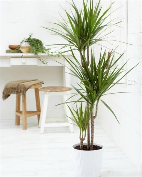 Decoración Fácil: 10 Mejores plantas de interior