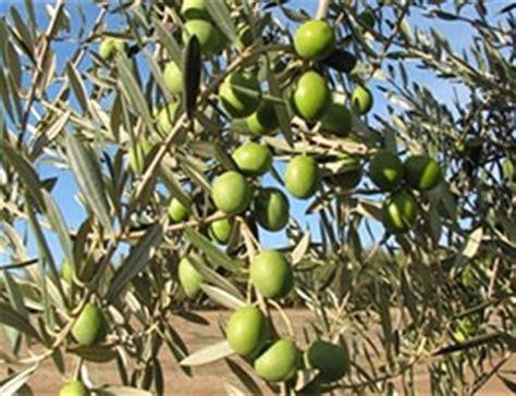 Definición de agricultura extensiva   Qué es, Significado ...