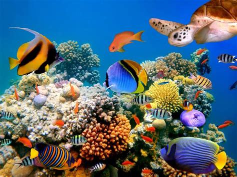 Definición de Biología Marina » Concepto en Definición ABC