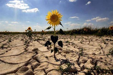 Definición de cambio climático   Parques Alegres I.A.P.