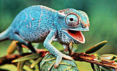 Definición de Reptiles, Qué es, su Significado y Concepto
