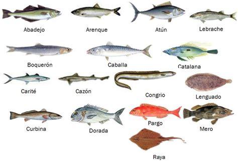 Definición de todos los tipos de peces