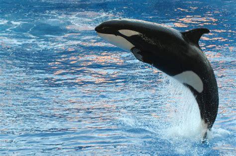 Delfiner – Wikipedia