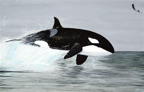 Delfines: Tipos de delfines