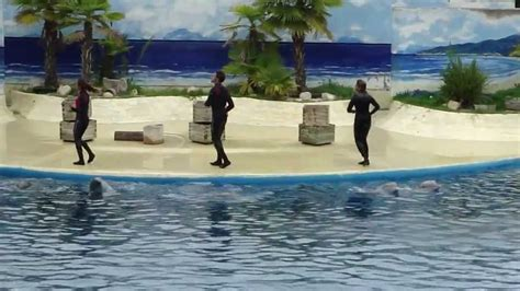 Delfines   Zoo de Madrid  Dolphins show    YouTube