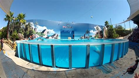Delphin Show Zoo Marin Portugal   YouTube