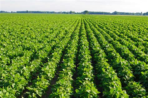 Demand Prospects for Old  and New Crop Soybeans | BigYield