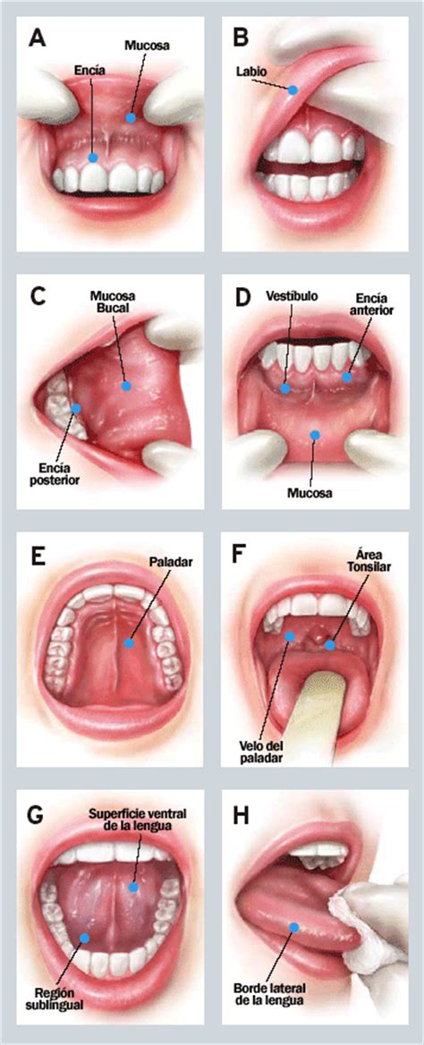 Dental Approach to the Elderly Patient: | Clínica Dental Gazel