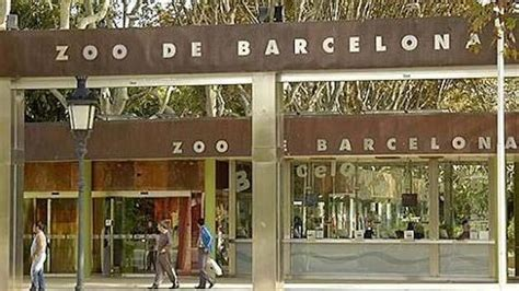 Denuncian al Zoo de Barcelona por matar animales sanos ...
