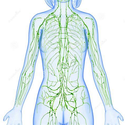 Depurare il sistema linfatico affinchè il sistema ...