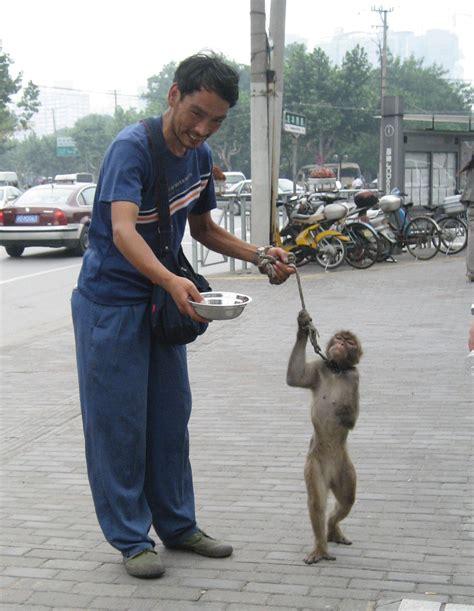 Derechos de los animales   Wikipedia, la enciclopedia libre