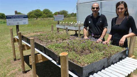 Desarrollan sistema modular para instalar techos verdes ...