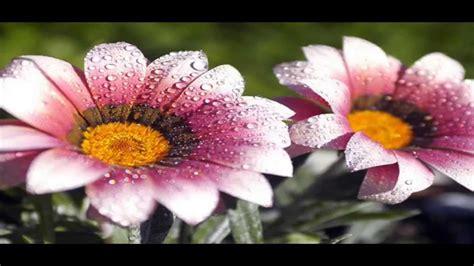 Descargar Fondos de Pantalla || Pack 1: Flores   YouTube