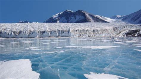 Descubiertas nuevas especies en la Antártida realmente ...