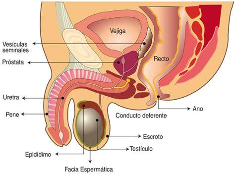 Descubra las causas del cáncer de próstata y su cura con ...