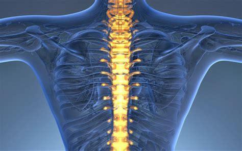 ¡Descubra nuestro catálogo de columnas vertebrales para ...
