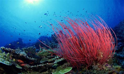 Descubre la asombrosa red eléctrica  viva  del fondo del mar