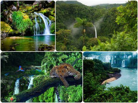 Descubre la belleza de la Selva Amazónica [2019 ...