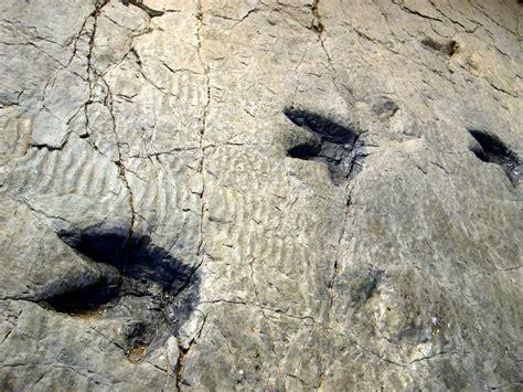 Descubre la ruta de los dinosaurios de La Rioja   Vivanco