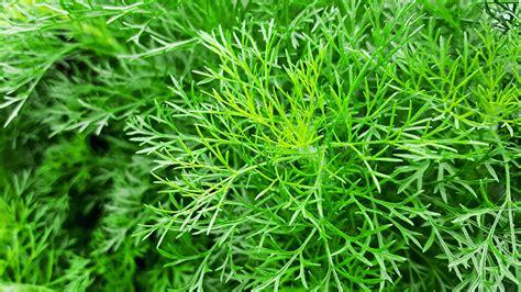 Descubre las mejores hierbas aromáticas para cultivar en ...