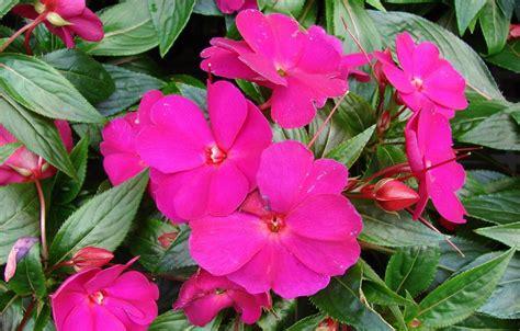 Descubre las plantas con flores todo el año