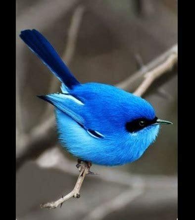 Descubre los pájaros más bonitos del mundo