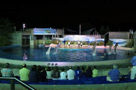 Descubre nuestra exhibición nocturna de delfines en Las ...