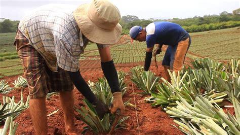 Descubre todo sobre la Agricultura Tradicional, su trabajo ...